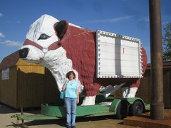 Giant cow at the Mule Trading Post