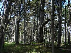 Crocker Grove - Forest