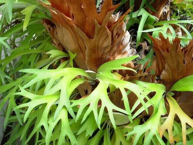 Shinjuku: Szklarnia: roślinka Uny