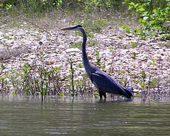 Illinois River Wildlife