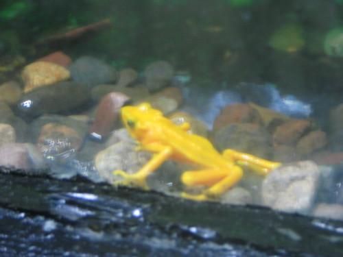 cool yellow frog
