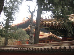 Forbidden city park