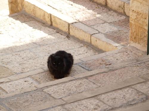 cat 8/248