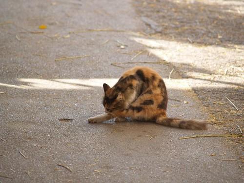 cat 28/248