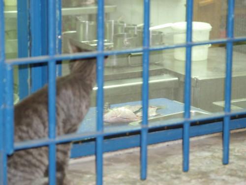cat 25/248
