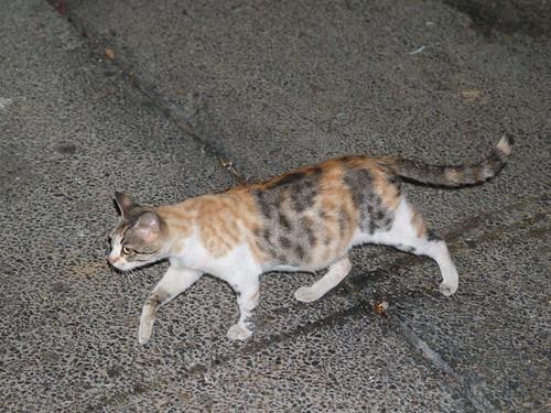 cat 34/248