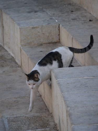 cat 89/248