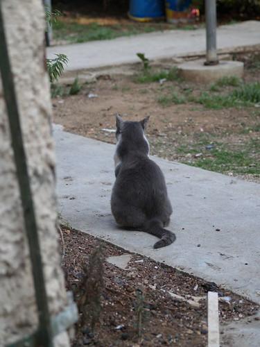 cat 125/248