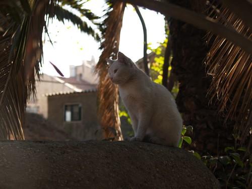 cat 128/248