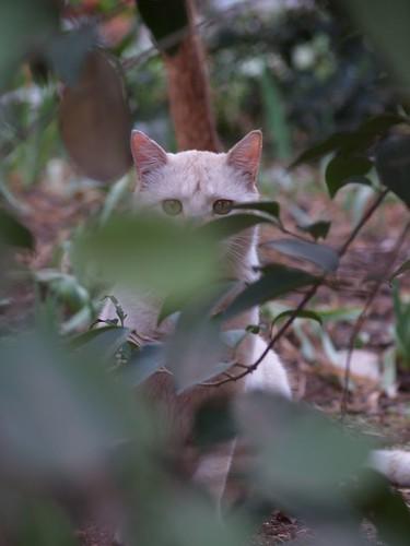 cat 147/248