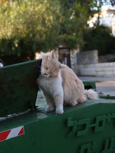 cat 174/248