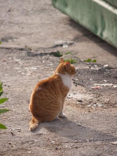 cat 197/248