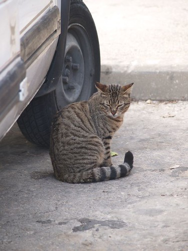 cat 203/248