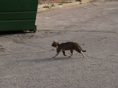 cat 201/248