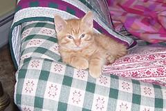kittenmay