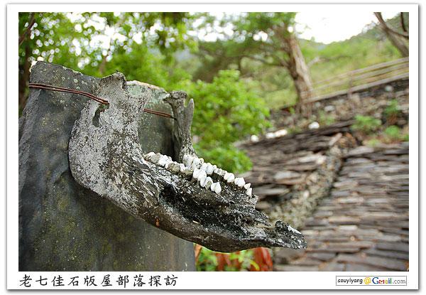 此張於部落中最古老、保存最完整的石版屋前拍攝的;經詢問,這應該是山豬的頭骨下額,據說有威嚇的作用。