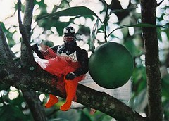 Venom Up A Tree