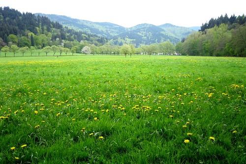 Landscape with dandelions