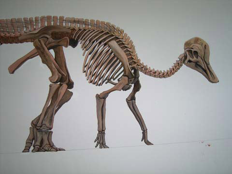 Corithosaurus