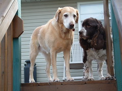Lucky and Jack