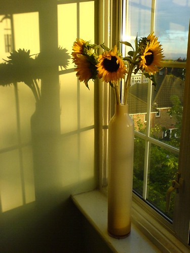 Sunflowers in a vase in Streatham at sunset