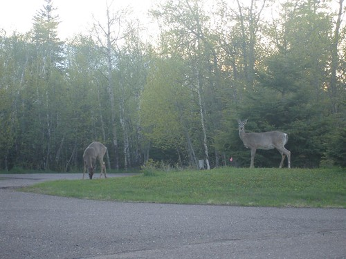Deer at Split Rock (2)