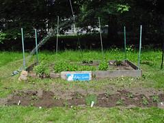 Molly's garden after