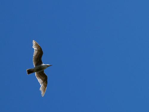 Fly, Jonathan, Fly!