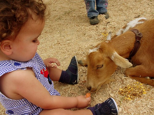 Timmy Feeding Goat