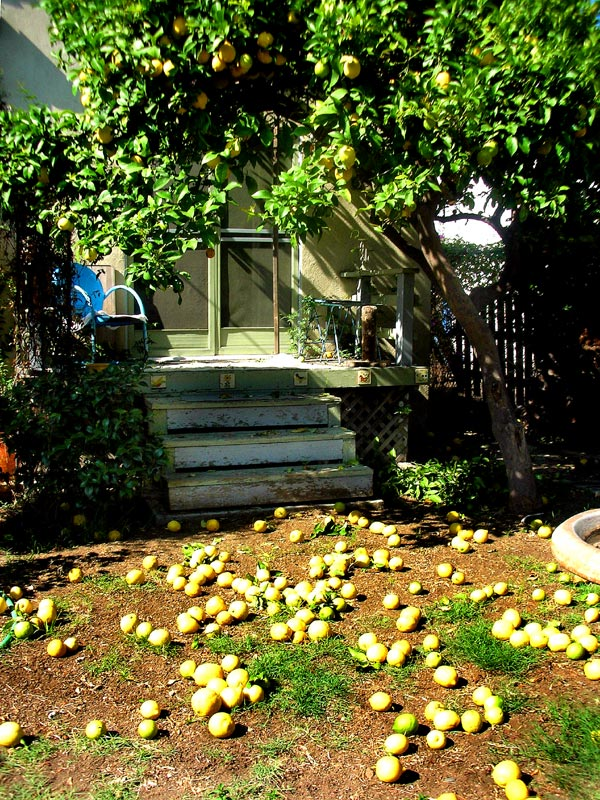 lemon yard