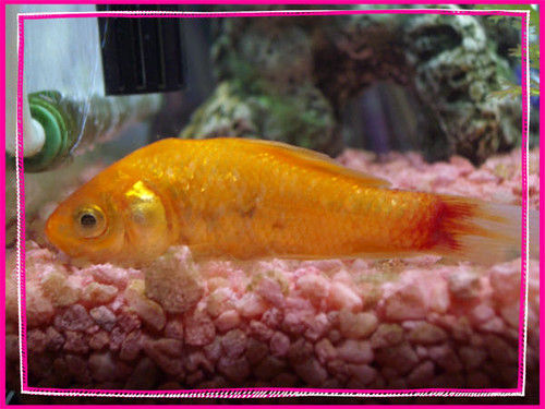sick fish