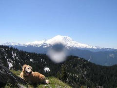 Summit Sadie (with some kind of a drop on the lens) on Noble Nob and her luncheon view
