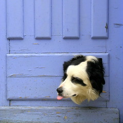 Dog and blue door photo by DIDS'