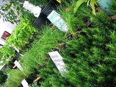 la cienega farmers' market herbs 1