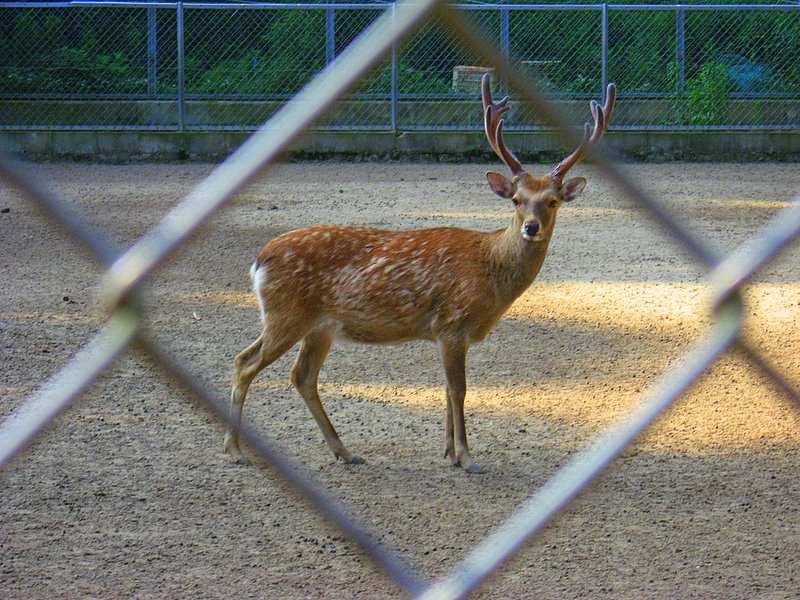 A single buck through the fence