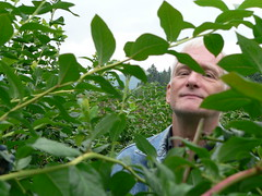 Dad in a blueberry tree