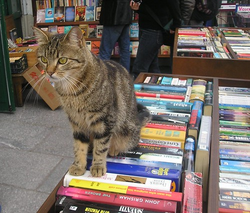 Cat & Books