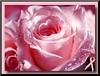 26611253608_f5194fc746_t