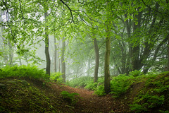 Beech mist 2 photo by J C Mills Photography
