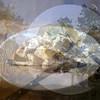 38734809524_beb5c91703_t