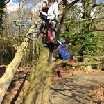 4 monkeys up a tree<br/>11 Feb 2018