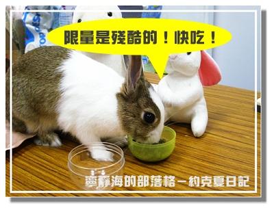約克夏日記_20060302_限量飼料快吃