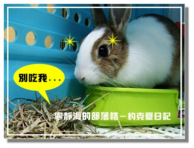 約克夏日記_20060306_兔與草