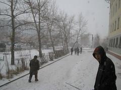 Snow of Spring