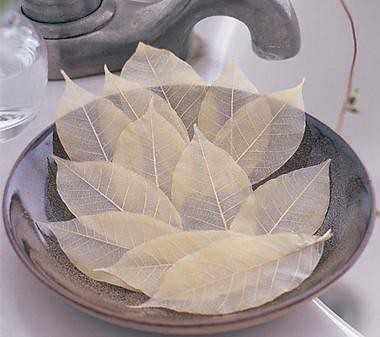 soap leaves