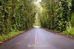 Estrada para Poipu