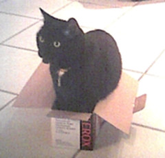 Angus in another box