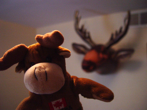 Moose and moose
