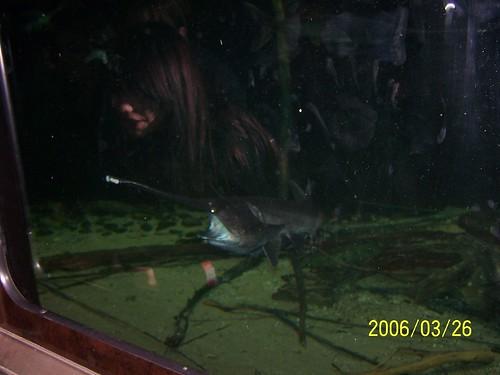 Paddlefish at Shedd