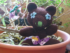 Lulu - the spring time bear
